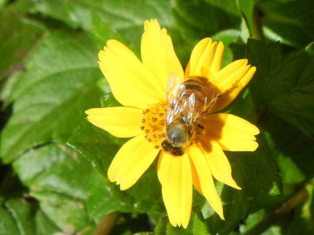 This image has an empty alt attribute; its file name is Yellow-Flower-Bee-036-1024x768.jpg
